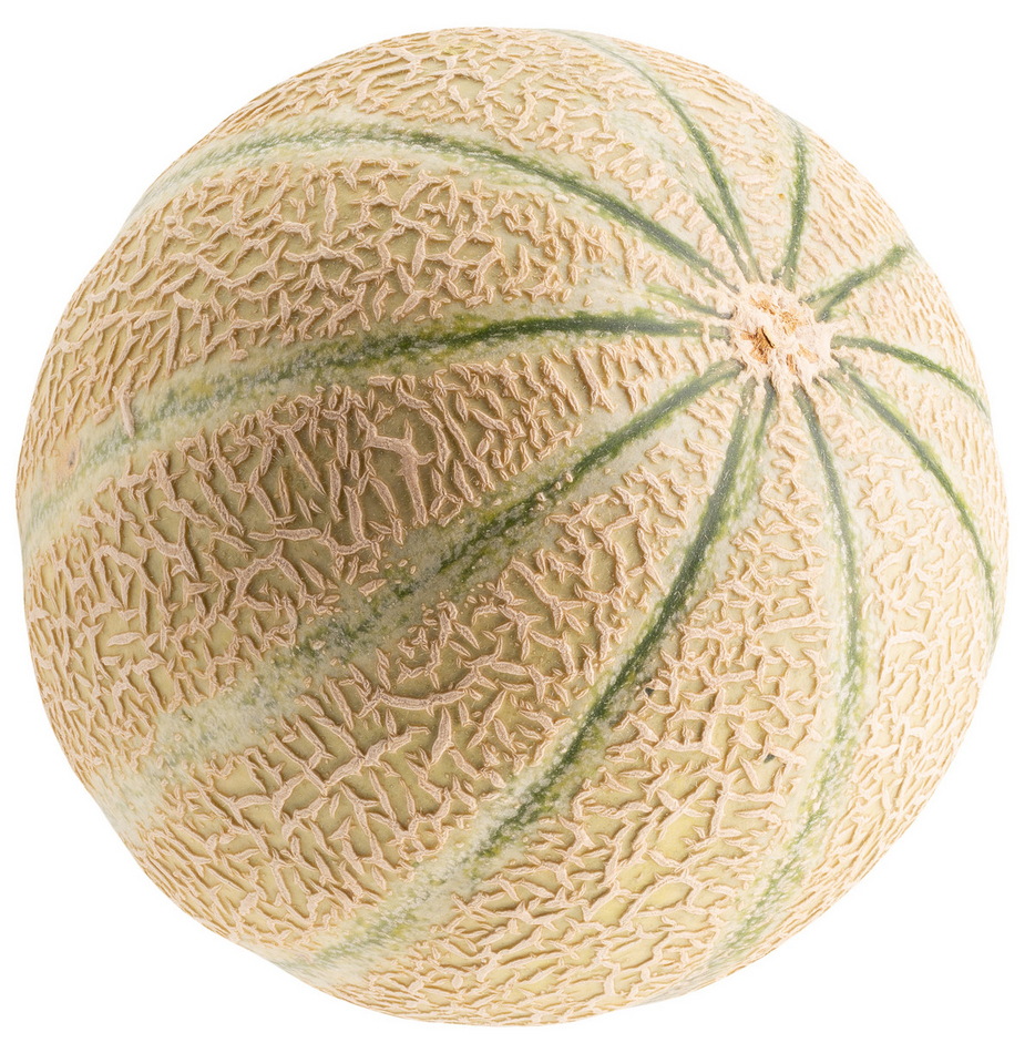 Cantaloupe Melon Order Online Fisher Of Newbury It appears as a cantaloupe, but with four, stubby legs and two, black beady eyes with a smile with teeth made of seeds. cantaloupe melon